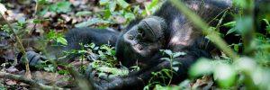 Kibale Safari