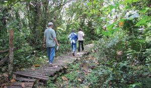 Kibale Forest Walk
