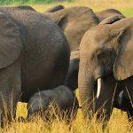 Queen Elizabeth Elephants