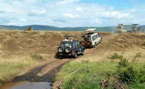 Guided Uganda Safaris