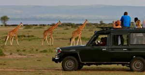 Game drive in Murchison Falls NP