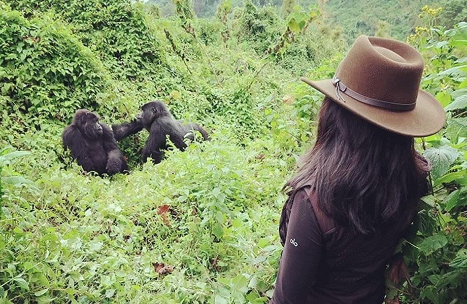 Ecofriendly Gorilla Trek